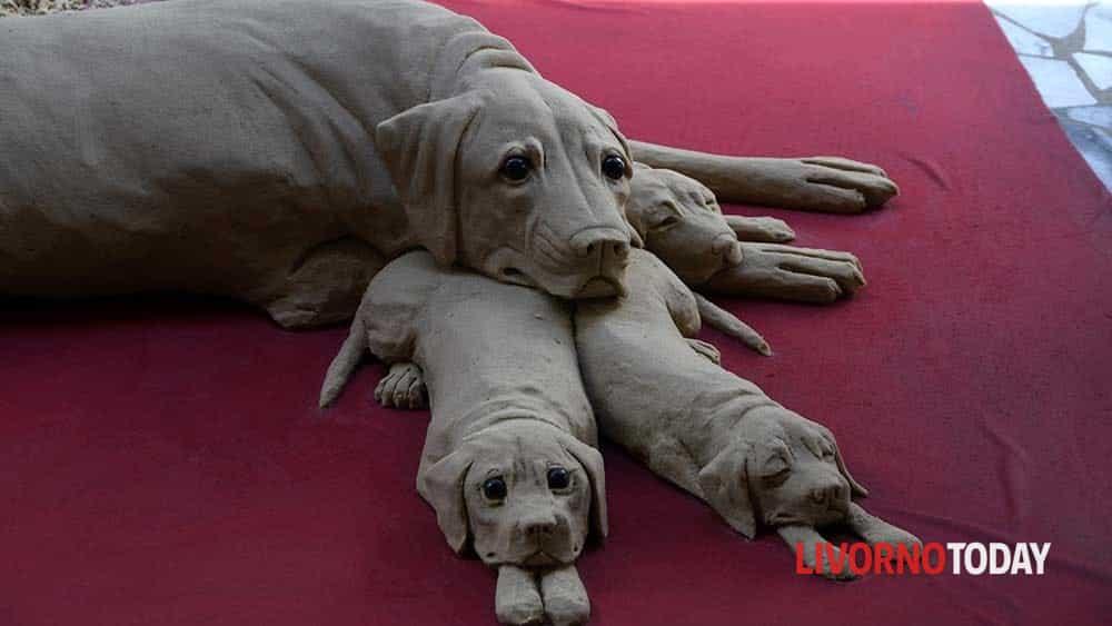 cane di sabbia (3)-2