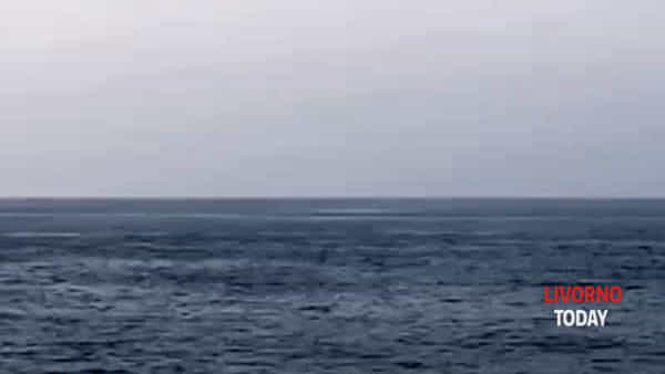 Isola d'Elba, due balene spuntano davanti Portoferraio