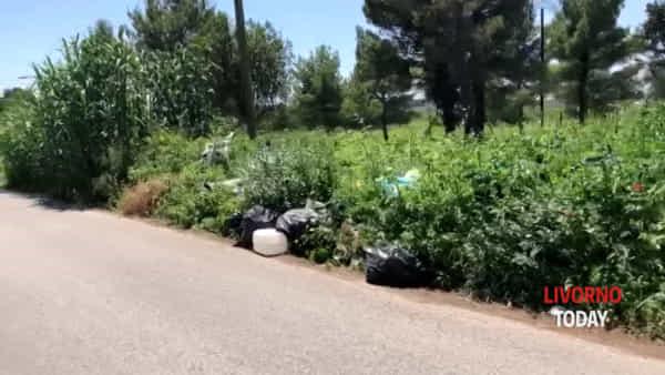 Sedie, taniche, bidoni e rifiuti: discarica a cielo aperto in via di Maestrale