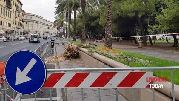 palma abbattuta viale italia  (1)-2