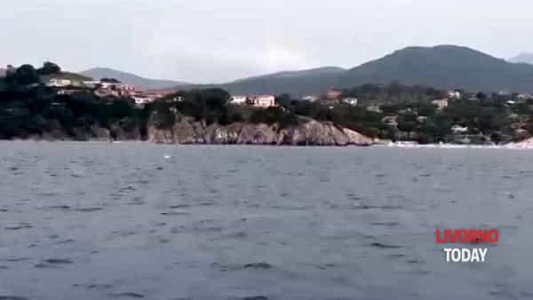 Isola d'Elba, nuovo avvistamento di balene a largo di Portoferraio